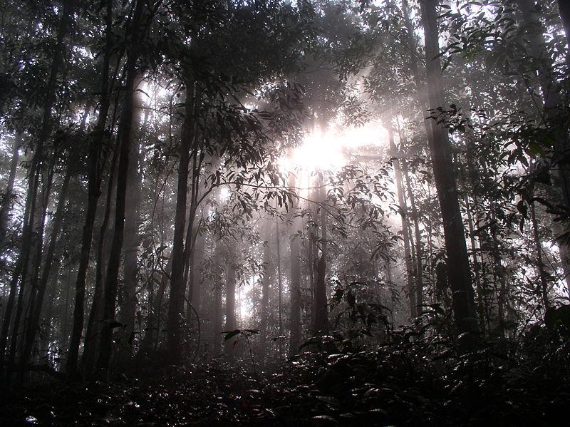 Рассвет в джунглях Калимантана