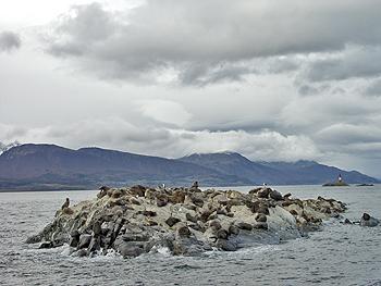 Лежбище котиков на архипелаге Огненная Земля