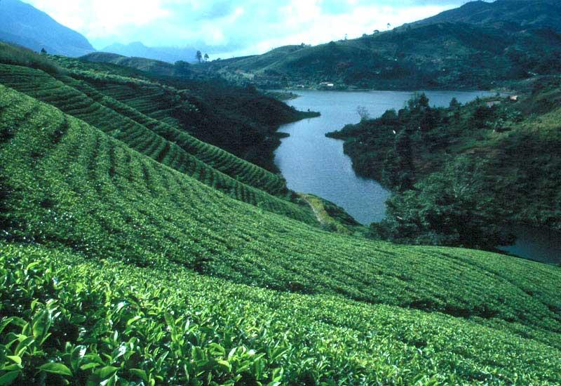 Река на острове Шри-Ланка